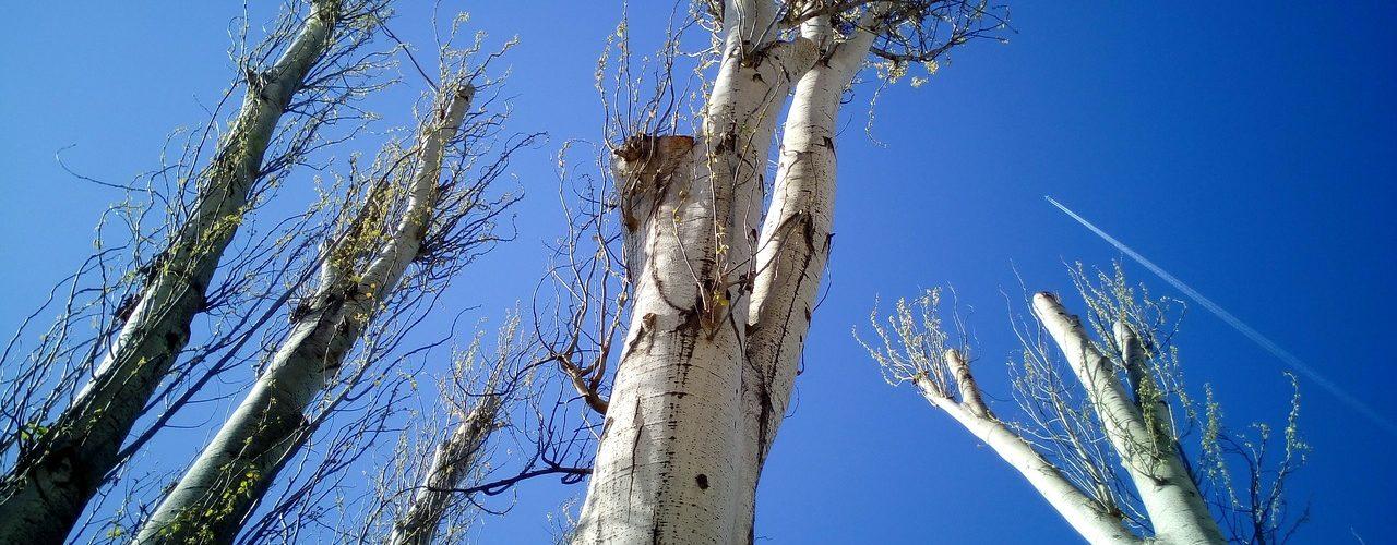 troncs d'arbre à couper